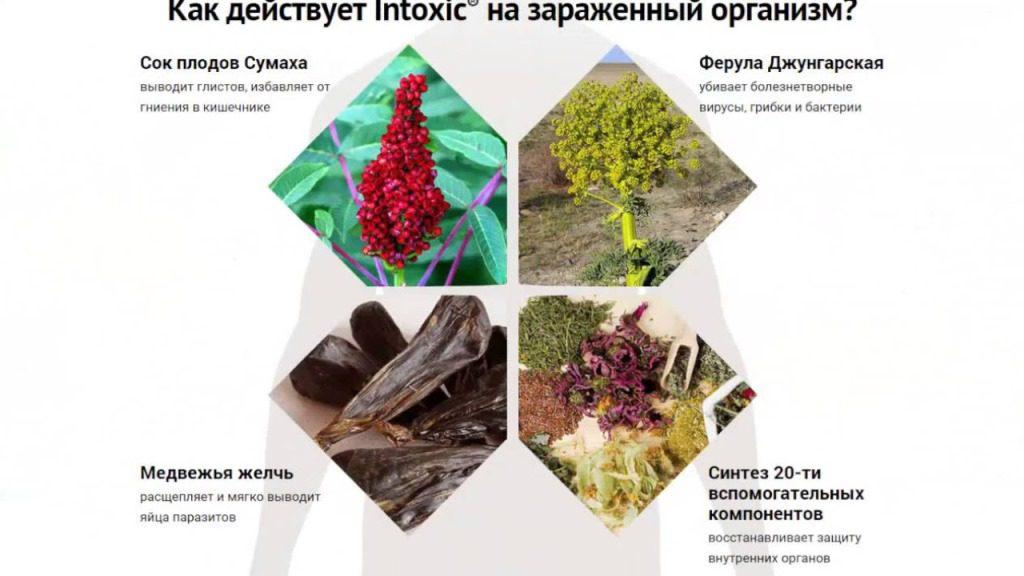 состав средства интоксик против паразитов в организме