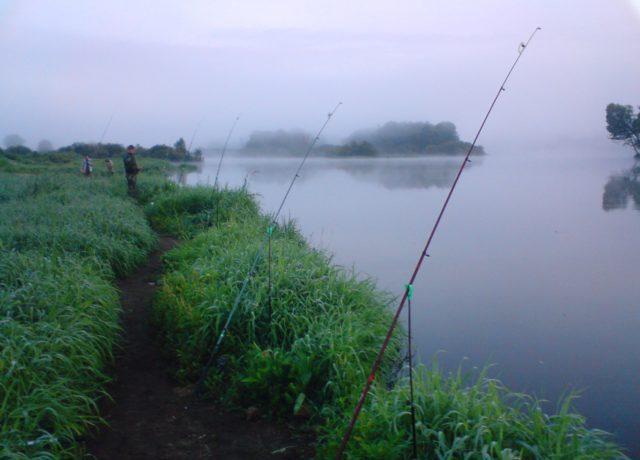 fish hungry отрицательные отзывы