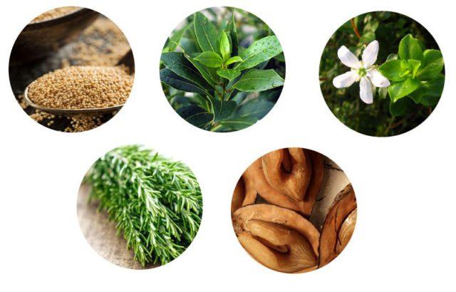 Препарат содержит активные вещества в высоких концентрациях, что позволяет эффективно уничтожать паразитов и очищать организм от токсичных продуктов распада