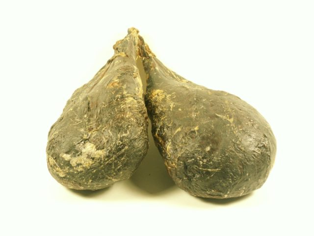 Мускус бобра — отличное лекарство от импотенции, аденомы простаты и простатита